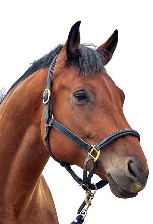 accessoires pour chevaux